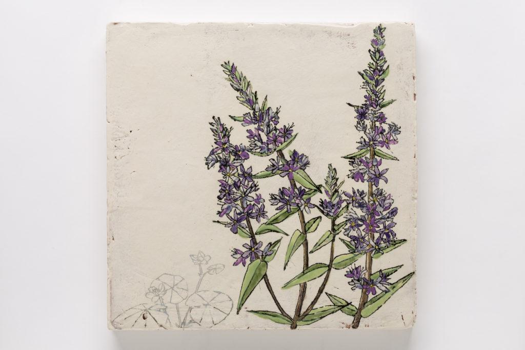 Endangered/Invasive (Floating Marsh Marigold & Purple Loosestrife)