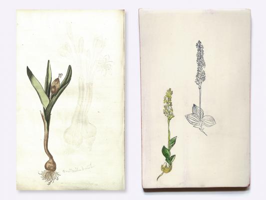 Anleitung zu der Pflanzenkenntniss… Salomon Schinz. 1744. Andersen Horticultural Library. UMN.