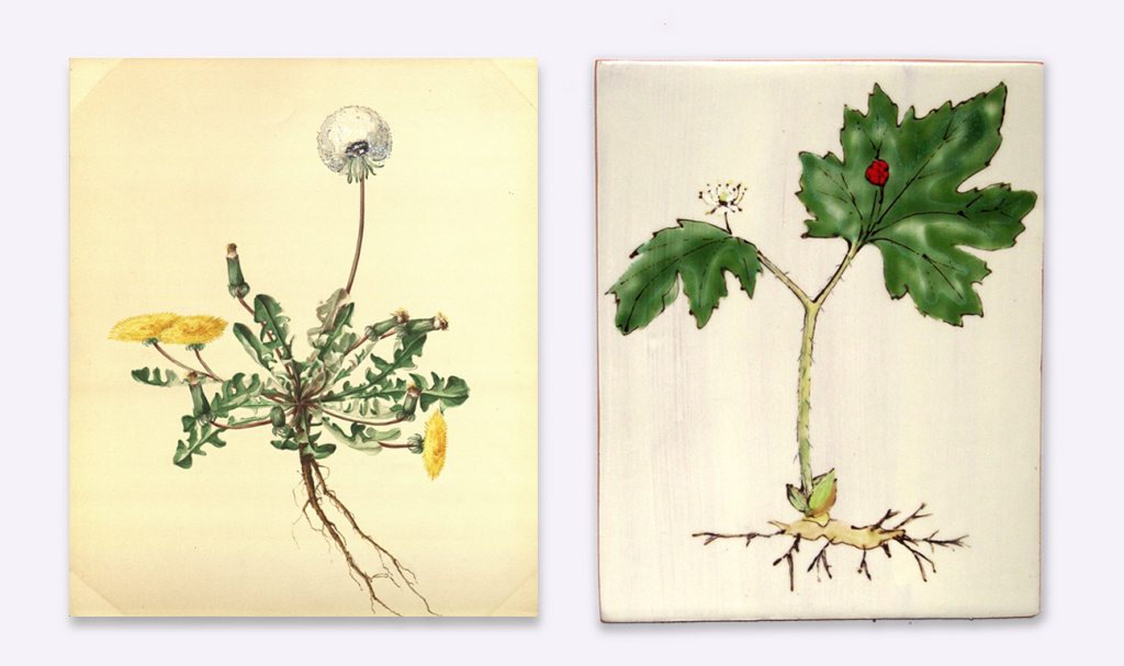 Agnes Williams. Andersen Horticultural Library. UMN. (left)